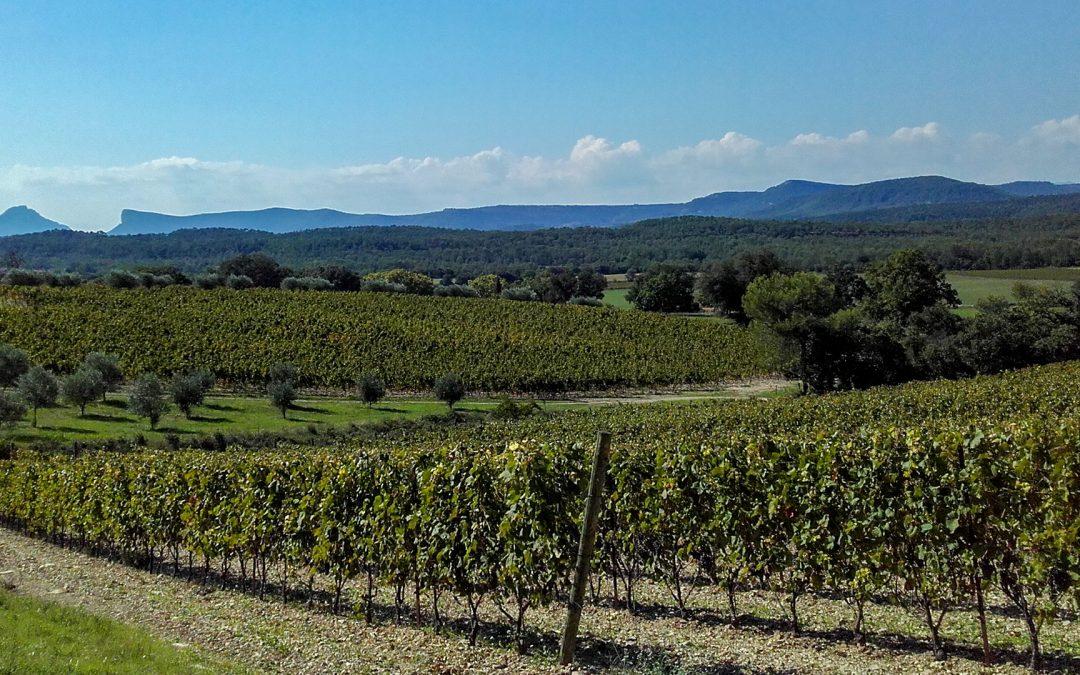 Le Guide Hachette des vins 2021, LES CLAPAS, un vin très réussi